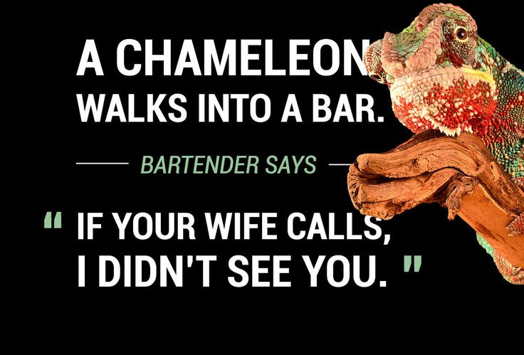"""38 New """"Animal Walks Into A Bar"""" Jokes, Because Puns Are Awesome"""