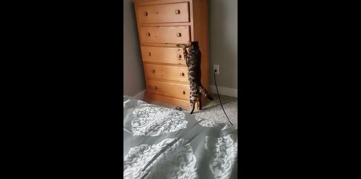 Dit is Loki. En Loki houdt van het donker. Vooral van donkere ladekastjes. Goed om te weten, want hoe moet je deze kat anders terugvinden als hij weer verstoppertje speelt? Nog zo'n slimmerd: deze kat kan je straks een pootje helpen als je een brood of taart gaat bakken. Video's en artikelenvan Margriet.nl ontvangen in…