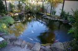 28 best landscaping for front yard images on pinterest for Koi pool water gardens thornton