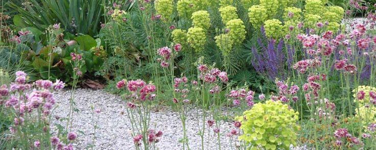De 'weinig werk graveltuin' van Claudia Roskam is een mooi voorbeeld van een onderhoudsvriendelijke tuin. Wil je zelf ook zo'n grindtuin aanleggen die ook nog eens tegen droogte kan, dan vind je in het artikel een mooi stap voor stap plan. En welke planten kun je, naast de in het artikel genoemde...