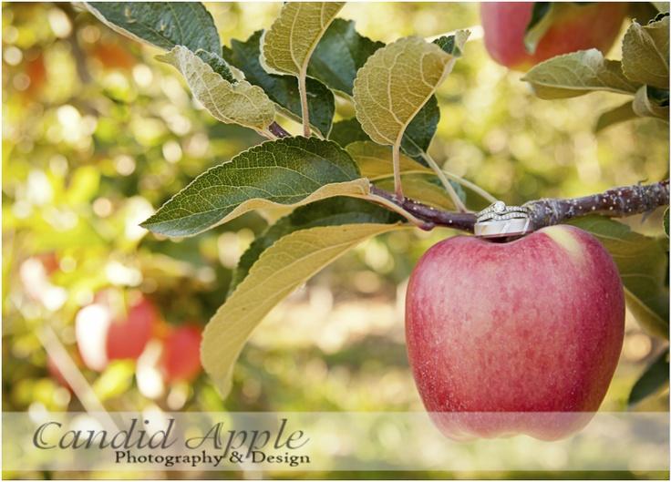Fall Wedding Photography Sunset Ranch Golf Club Orchard Apple Ring Shot Kelowna www.candidapple.ca