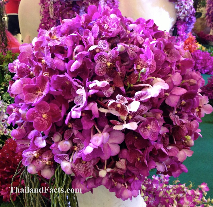 ThailandFacts.com bunch of orchids