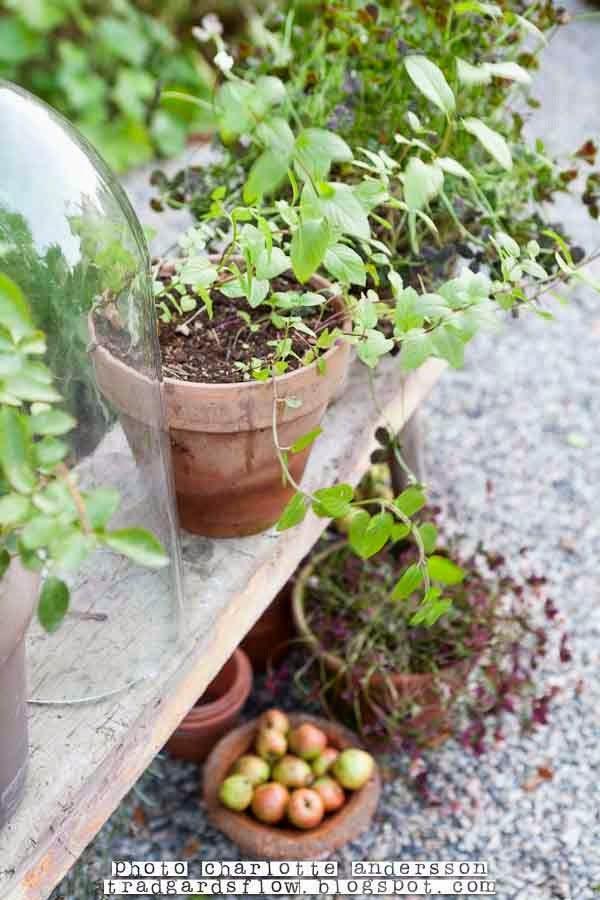 Best 25 garden cloche ideas on pinterest 2 liter bottle for Garden cloche designs