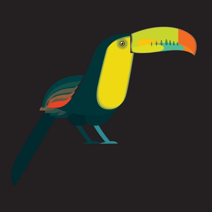 Fluid Animals: Toucan || Ben the Illustrator || http://bentheillustrator.prosite.com