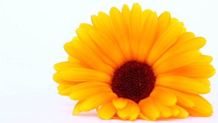 Hilft dir bei: Augenentzündung, Gerstenkörnern Bluterguss, Hautblasen, Schwellung  Du brauchst: 1 TL Ringelblumenblüten 1 Teeei 250 ml heißes Wasser 1 sterile Kompresse  Und so geht's: Gieße 1 TL Ringelblumen in einem Teeei...
