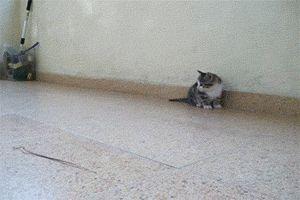 Cats & Dogs, More GIFs: http://catsdogsblog.tumblr.com