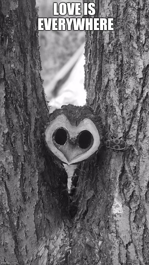 Picture by Giulia Bergonzoni #love #everywhere #QUOTE #nature #nut #shape #heart #incredible