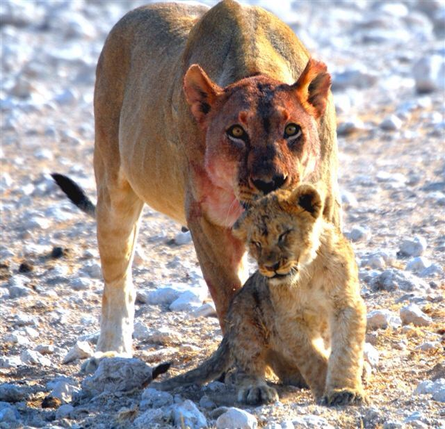 You need the wash mom. Etosha, Namibia