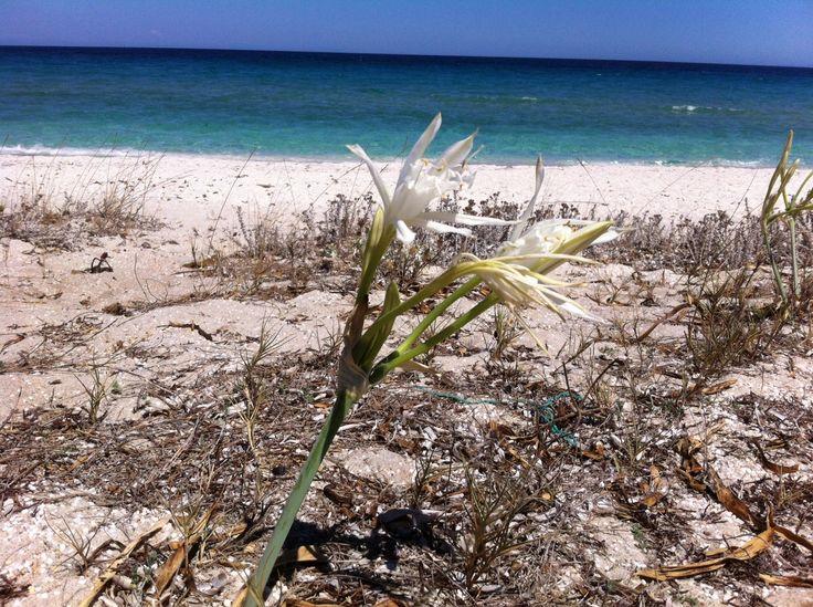 Il fiore di Ezzi Mannu (Paolo)