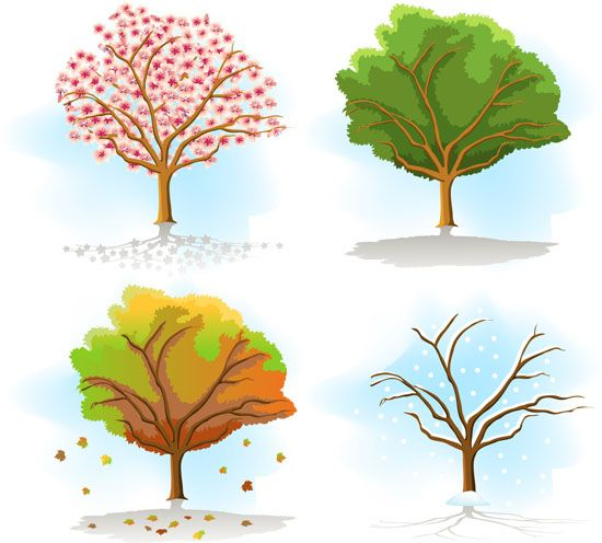 Four Seasons Tree Drawing Same Tree In Different Seasons