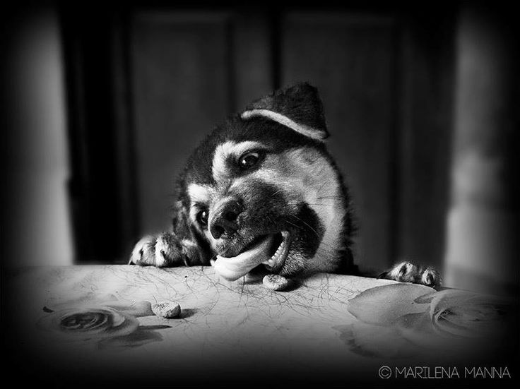 Il cane Morfeo by Marilena Manna on 500px