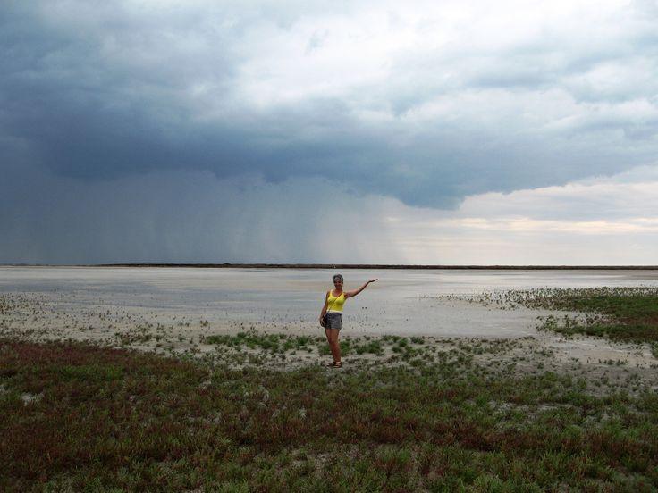 Берега озера Сиваш густо поросли солеросом