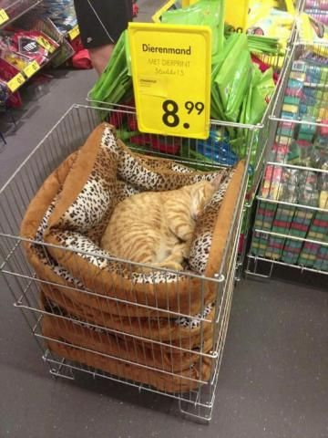 PetsLady's Pick: Funny Shopping Cat Of The Day...see more at PetsLady.com -The FUN site for Animal Lovers