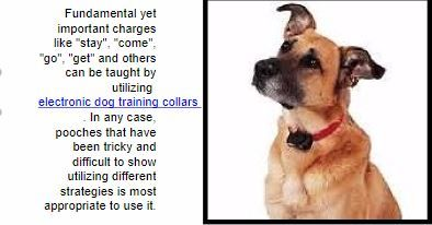 One of the first options that strike the minds of the dog owners is to get the dog trained by a professional trainer. However, this option isn't affordable for everyone. In such cases, these best dog shock training collars act as an effective, cheap and harmless alternative for the dog and you. If you are impressed with these collars and are looking for such collars, you can find them at www.alphadogcollars.com