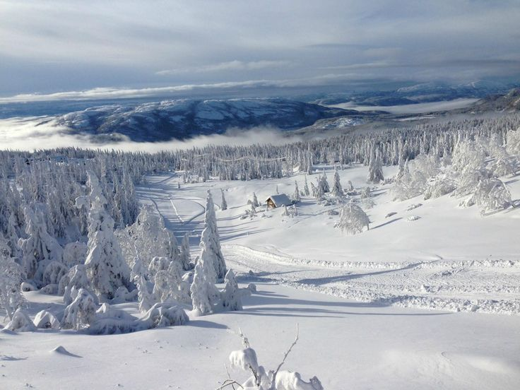 Lifjell - Bo I Telemark, Norway