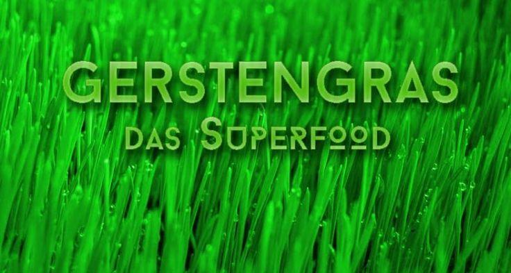 Gerstengras Superfood ?