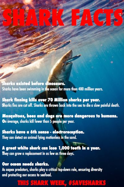 SHARK FINNING IS SO MEAN, SO BRUTAL. WTF
