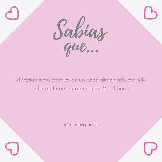 Sabias que... Tu leche se digiere perfectamente en el estómago de tu bebé. ▪ #mamaenpañales #soymama #lactanciamaterna #lactanciamaternaexclusiva #lme #maternidad #lactivista #elclub #LasQueAmamantamos #lactafacts