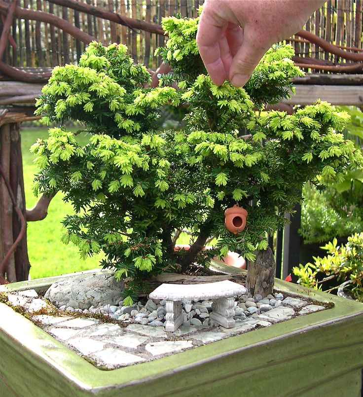 Why Do Conifers Make Great Mini Garden Trees?