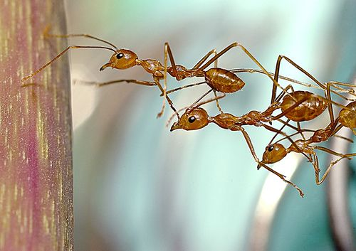 Natural Ant Control remedies.  There are even more ideas in the comments.