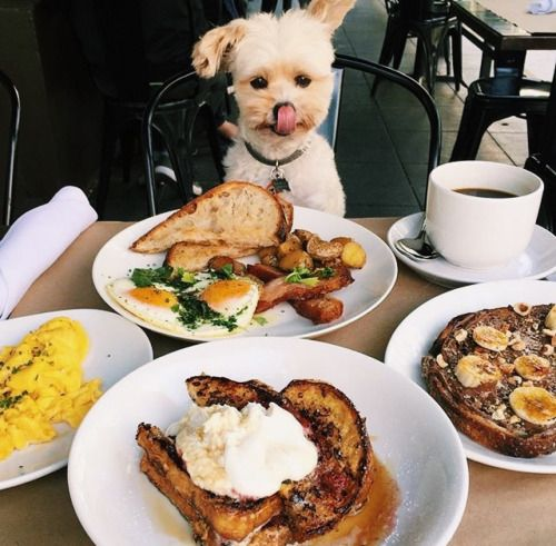 #brightlydecoratedlife tip: kindness is like brunch, it makes the ruff times sweeter