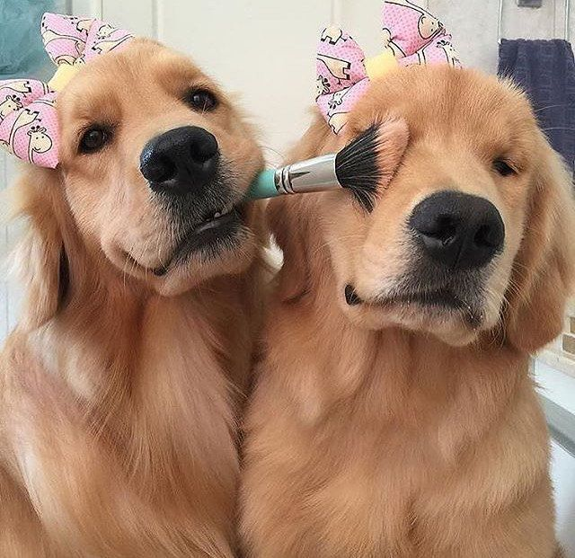 17 Dogs Who Love Makeup So Much They Should Have Their Own Youtube Channels Cute Baby Animals Cute Animals Animals