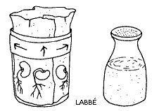 Auf der Fensterbank: Bohnen pflanzen - Zzzebra, das Web-Magazin für Kinder   Labbé Verlag