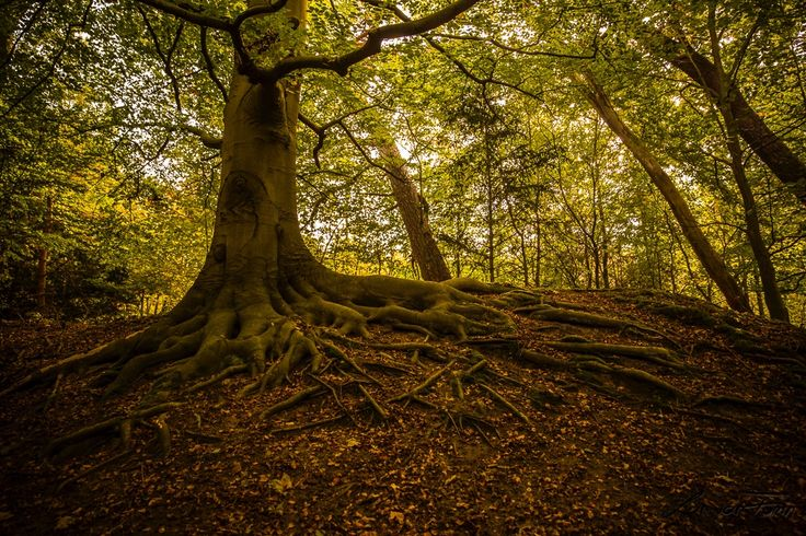 Fall in The Netherlands | Forest: Duin en Kruidberg | by Lyan van Furth | lvfphotography.com