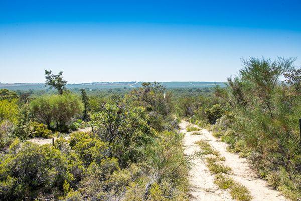 Gnangara Pines Powerlines