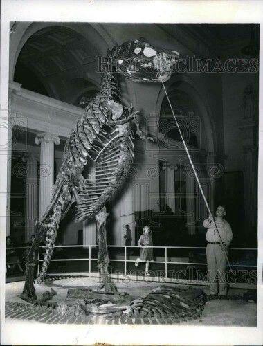 Gorgosaurus, Chicago Natural History Museum.  | In China? try www.importedFun.com for Award Winning Kid's Science |