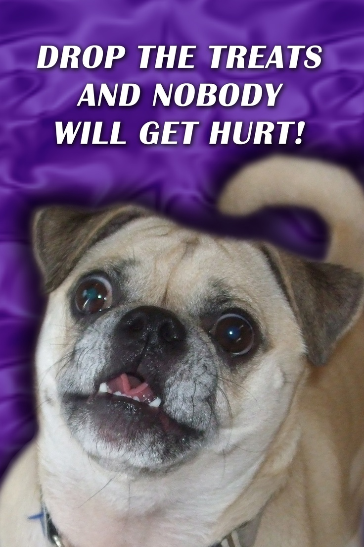 19 Best Gus The Chug S Holiday Cards Images On Pinterest Holiday