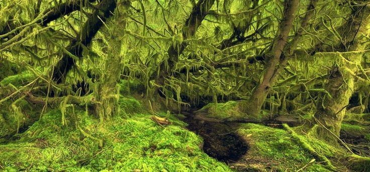 Фотография Шотландия - умеренного тропического леса автор Килиан Шёнбергер на 500px