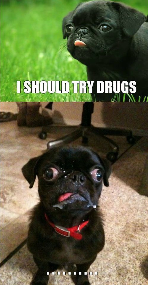 Beware of Dog. Don't Do Drugs. Time for Rehab. Cute Dog Ugly Dog Before After  ---- best hilarious jokes funny pictures walmart humor fail