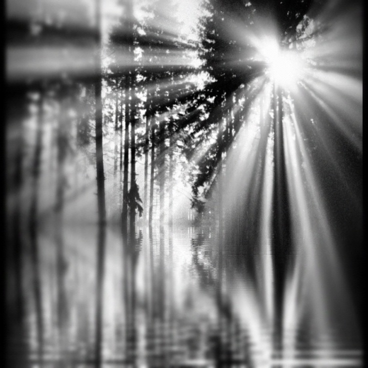 Sunlight Through Trees Black And White