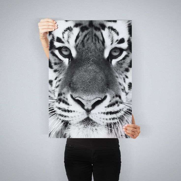 """""""Tiger"""" // poster by People of Tomorrow // available in 4 sizes // www.peopleoftomorrow.no"""