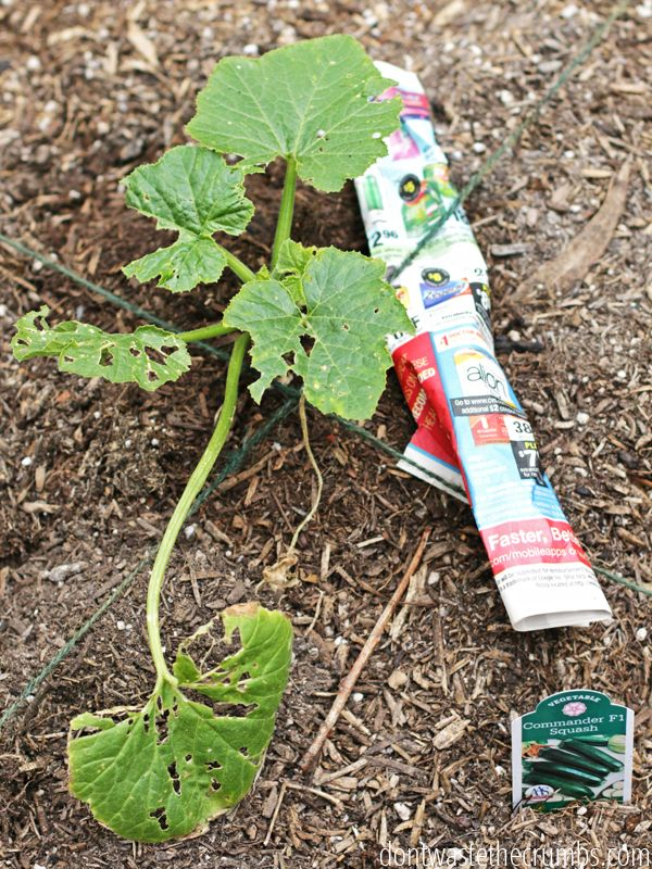 Awesome gardening hacks that really work! Tips for tomatoes, bugs, watering and keeping plants warm in cooler weather. Tried & true, these gardening tips are worth giving a try! :: DontWastetheCrumbs.com