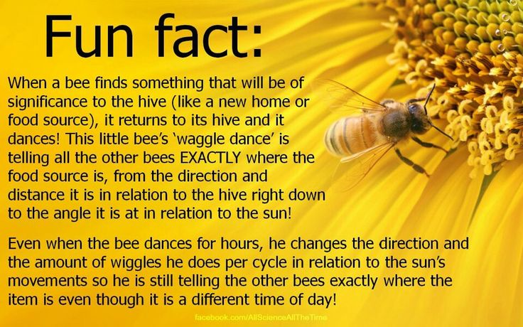 Bees. How do we know?!