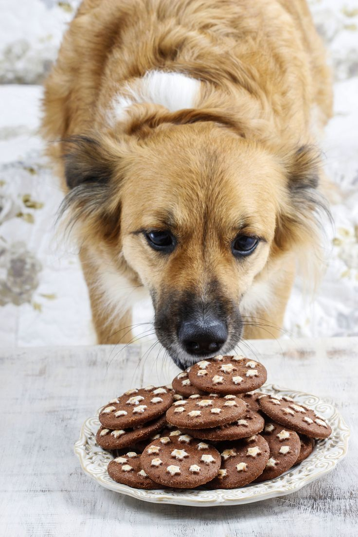Best 25+ Dog ate chocolate ideas on Pinterest | Dog care, Puppy ...