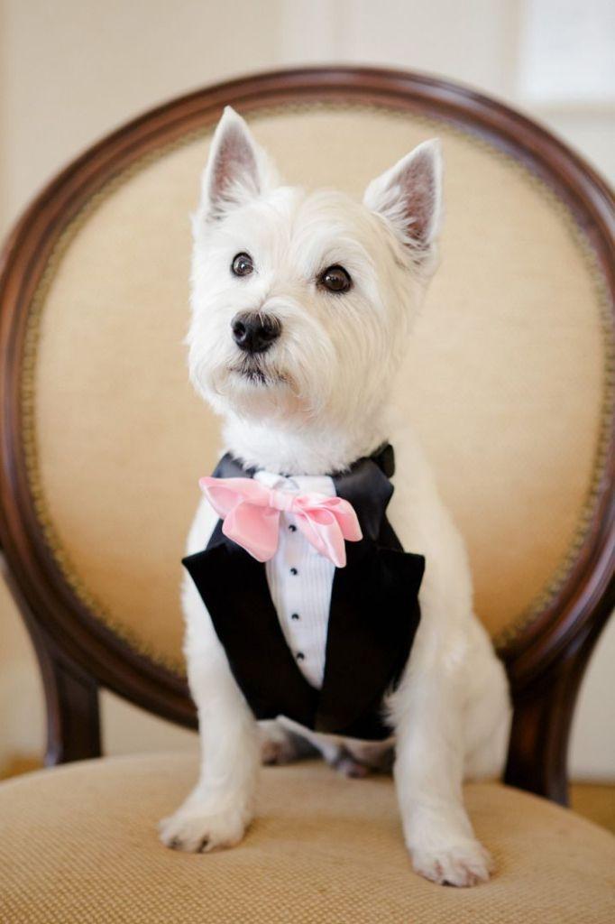 perro de esmoquin en tu boda