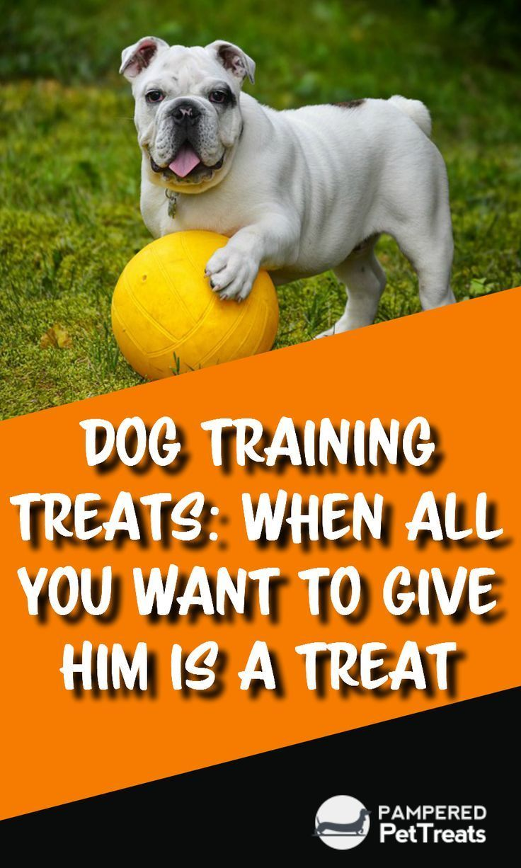 Dog Training Treats When All You Want To Give Him Is A Treat