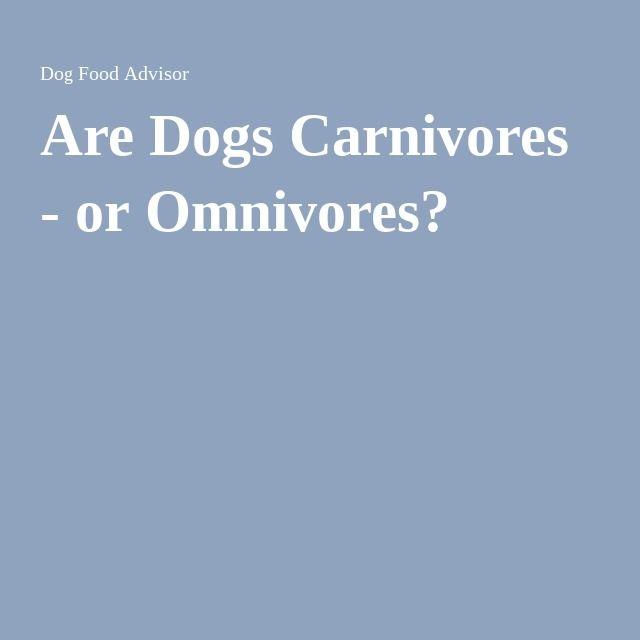 Are Dogs Carnivores - or Omnivores?