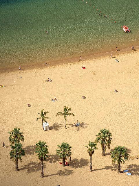 Las palmenras de la playa de Las Teresitas, uno de los lugares mas bonitos de #Tenerife