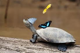 ready to fly?Photos, Friends, Nature, Butterflies, Beautiful, Tortoies, Turtles, Backgrounds Pictures, Adorable Animal