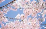 Cherry-Blossom-Treezpsb41bd9a7