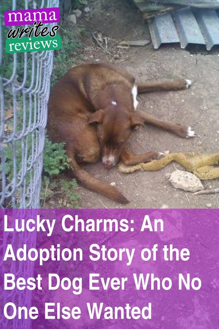 An Adoption Tail Of The Best Dog Who No One Else Wanted Pet Insurance Reviews Adoption Stories Dog Stories
