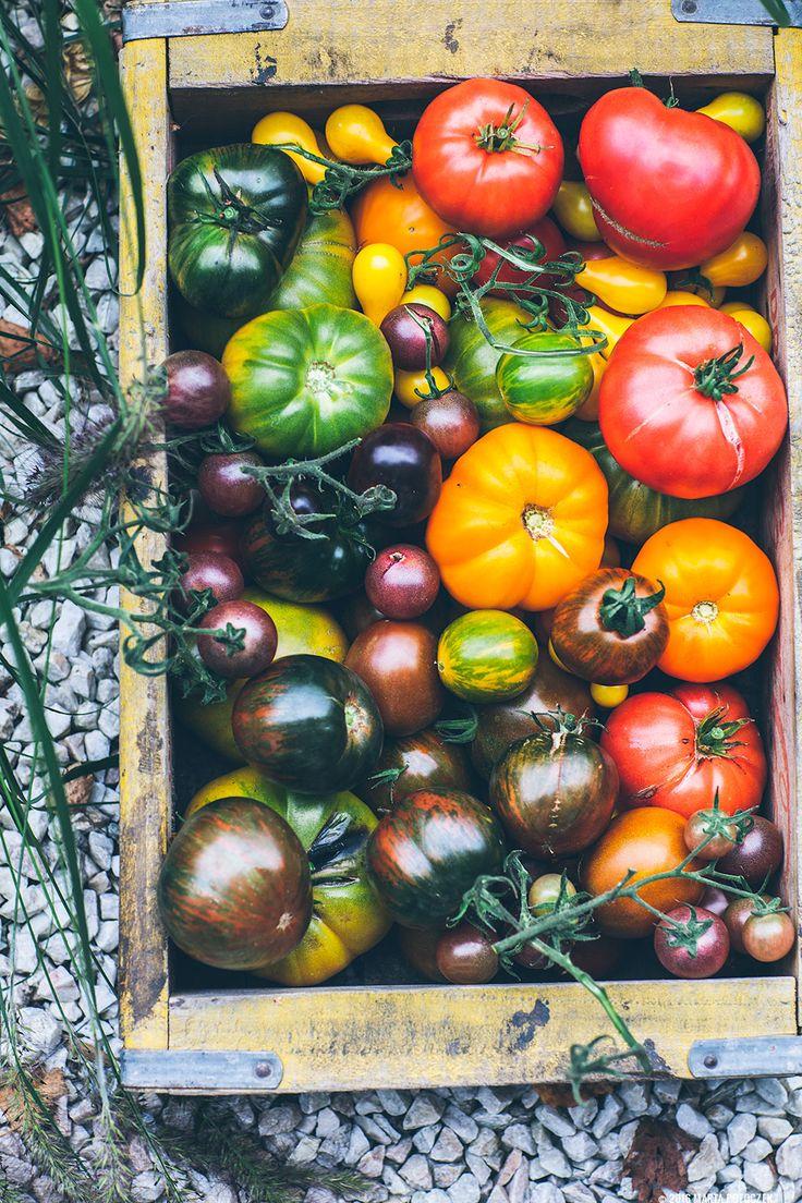 Uprawa pomidorów- moje doświadczenia i sekrety | Lazy Sunday | Leniwa Niedziela | lifestyle blog