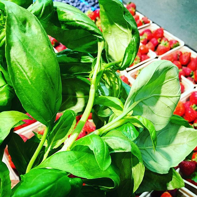 Basil, blueberries and ruby red strawberries ... I envision dessert! @calgaryfarmersmarket @cherrypityyc #turkeydinner #farmfresh #keepitlocal #sixfootcanasian #6FCA #yyc