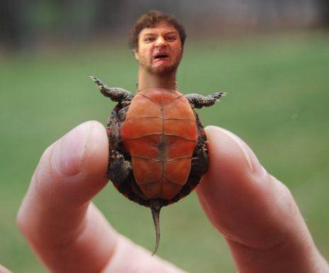 Y Wont My Turtle Eat 17 Best images about M...