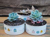 Reciclar y regalar: de latas a macetas {DIY Día del Amigo}: Vero Palazzo - Home Deco