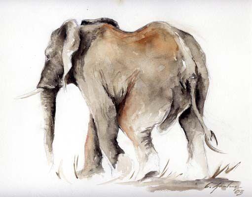 Celine Gentner, die Tiermalerin, Aquarelle und Zeichnungen Elefant, Aquarell